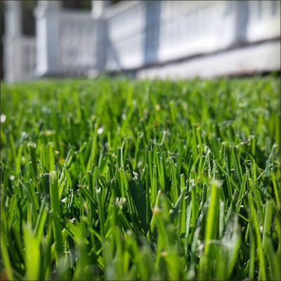 Shop Lawn and Plant Care