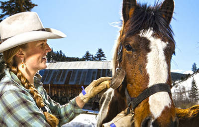 Shop Horse Supplies at Murdoch's Ranch and Home Supply