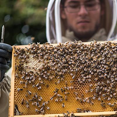 Shop Beekeeping