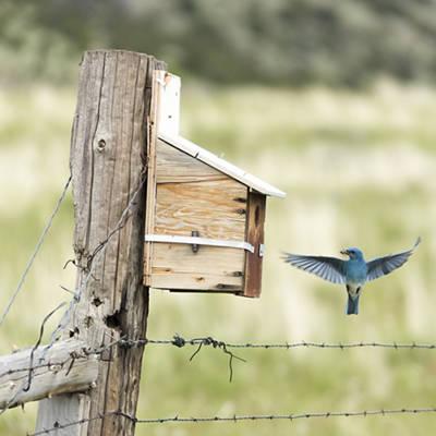 Shop Bird Houses and Feeders