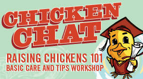 In-store Chicken Chats