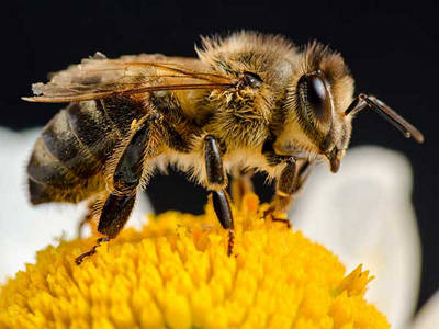 MURDOCH'S RUSSIAN BEES