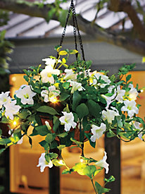 Petunia Hanging Flower Basket