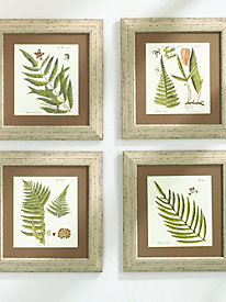 Fern Prints (set of 4)