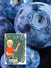 Little Giant Blueberries