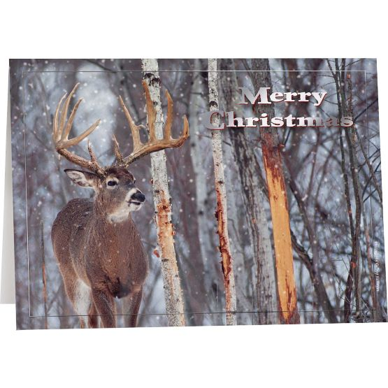 Legendary Christmas Cards (12 Pack) at Legendary Whitetails