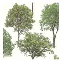 Tree Tops Photographic Removable Wallpaper in Green