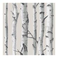 Nuwallpaper™ Birch Tree Peel And Stick Wallpaper in Grey
