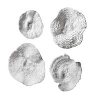 Uttermost Sea Coral Wall Art (Set of 4)