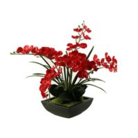 D&W Silks Red Phalaenopsis Orchids in Square Metal Planter
