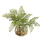 D&W Silks Maidenhair Fern in Glass Bowl