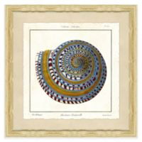 Square Shell II Framed Giclée Wall Art