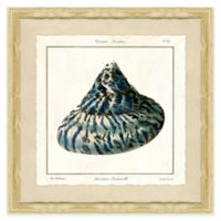 Square Shell IV Framed Giclée Wall Art