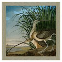 Long-Billed Curlews Framed Wall Art