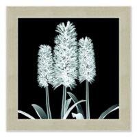 Hyacinth X-Ray Flower Wall Art