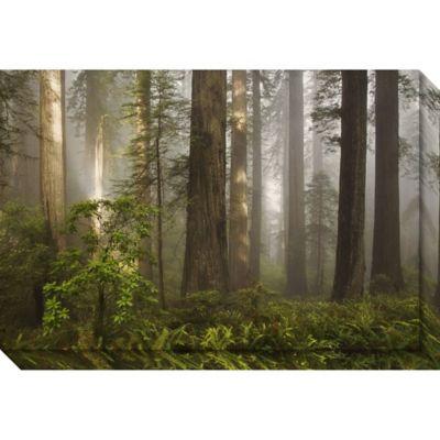 Buy lighted wall art from bed bath beyond david lorenz winston morning light forest canvas wall art aloadofball Choice Image