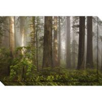 David Lorenz Winston Morning Light Forest Canvas Wall Art