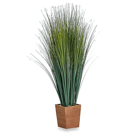 Decorative tall grass in a woven rope pot bed bath beyond for Tall ornamental grasses for pots