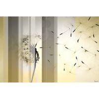 Parvez Taj Dandelion 18-Inch x 12-Inch Canvas Wall Art