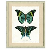Double Butterfly Print I 19-Inch x 23-Inch Framed Wall Art