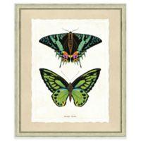 Double Butterfly Print II 19-Inch x 23-Inch Framed Wall Art