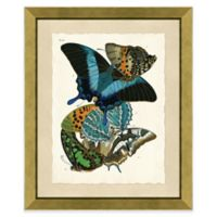 Butterfly Grouping Print I 20-Inch x 24-Inch Framed Wall Art