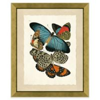 Butterfly Grouping Print II 20-Inch x 24-Inch Framed Wall Art