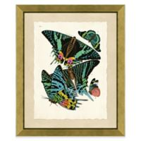 Butterfly Grouping Print III 20-Inch x 24-Inch Framed Wall Art