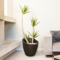 Mayne® Modesto 20-Inch Round Indoor/Outdoor Planter in Espresso