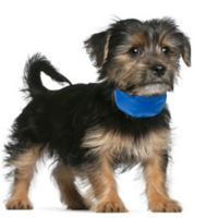 Petmaker Small Cooling Pet Collar in Blue