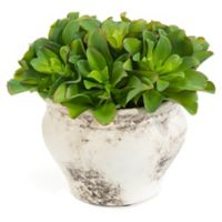 John-Richard 11-Inch Monaco Succulents Floral Arrangement in Green