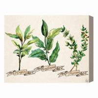 Herbs on Brown 16-Inch x 20-Inch Canvas Wall Art