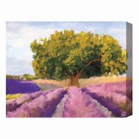 Lavandula Field 16-Inch x 20-Inch Canvas Wall Art