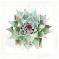 "PTM Images ""Desert Star I"" 14.5-Inch x 14.5-Inch Print Wall Art"