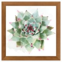 "PTM Images ""Desert Star II"" 14.5-Inch x 14.5-Inch Print Wall Art"