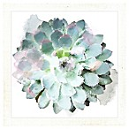 "PTM Images ""Succulents I"" 14.5-Inch x 14.5-Inch Print Wall Art"