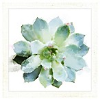 "PTM Images ""Succulents II"" 14.5-Inch x 14.5-Inch Print Wall Art"