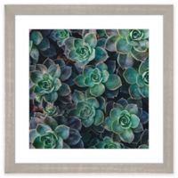 "PTM Images ""Succulent I"" 17.5-Inch x 17.5-Inch Print Wall"