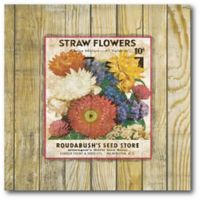 Courtside Market Straw Flowers 16-Inch Square Canvas Wall Art