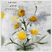 """PTM Images """"Never Stop Growing"""" 28-Inch x 28-Inch Canvas Wall Art"""