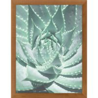 "PTM Images ""Spiky Succulent"" 12-Inch x 16-Inch Print Wall Art"