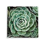 Thirstystone® Echeveria Square Single Coaster