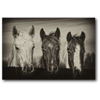 Courtside Market Three Amigos 20-Inch x 16-Inch Canvas Wall Art