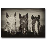 Courtside Market Three Amigos 20-Inch x 16-Inch Canvas Wall Art
