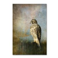 On The Fence Red Shouldered Hawk 12-Inch x 19-Inch Canvas Wall Art