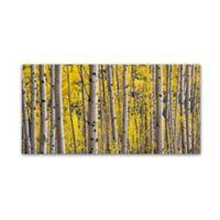 """Hugh Evans """"Aspen Colorado"""" 12-Inch x 24-Inch Canvas Wall Art"""