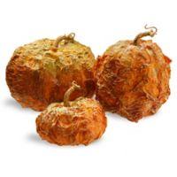 National Tree Company® Icky Pumpkins in Orange (Set of 3)