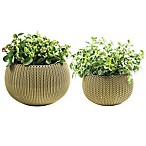 Keter® Cozies Knit 2-Piece Round Resin Indoor/Outdoor Planter Set in Citrus Green (Set of 2)