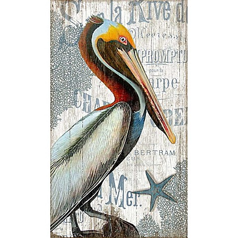 Pelican\