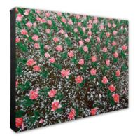 Frosted Pink Tulip Field 20-inch x 24-inch Canvas Wall Art